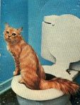 Open toilet!